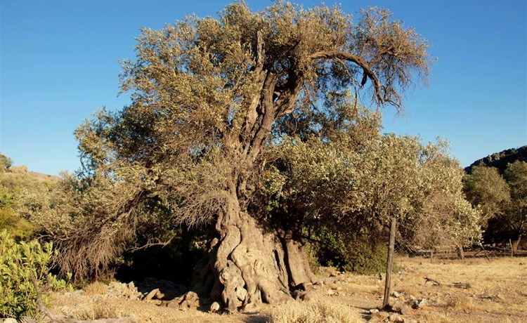 Tour photo of SECRETS OF THE OLIVE ORCHARD: An agro-ecological journey to the olive's environment